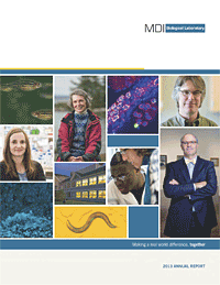 annual_report_cover_2013