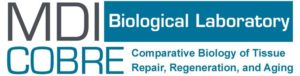 MDI Biological Laboratory COBRE: Comparative Biology of Tissue Repair, Regeneration, and Aging