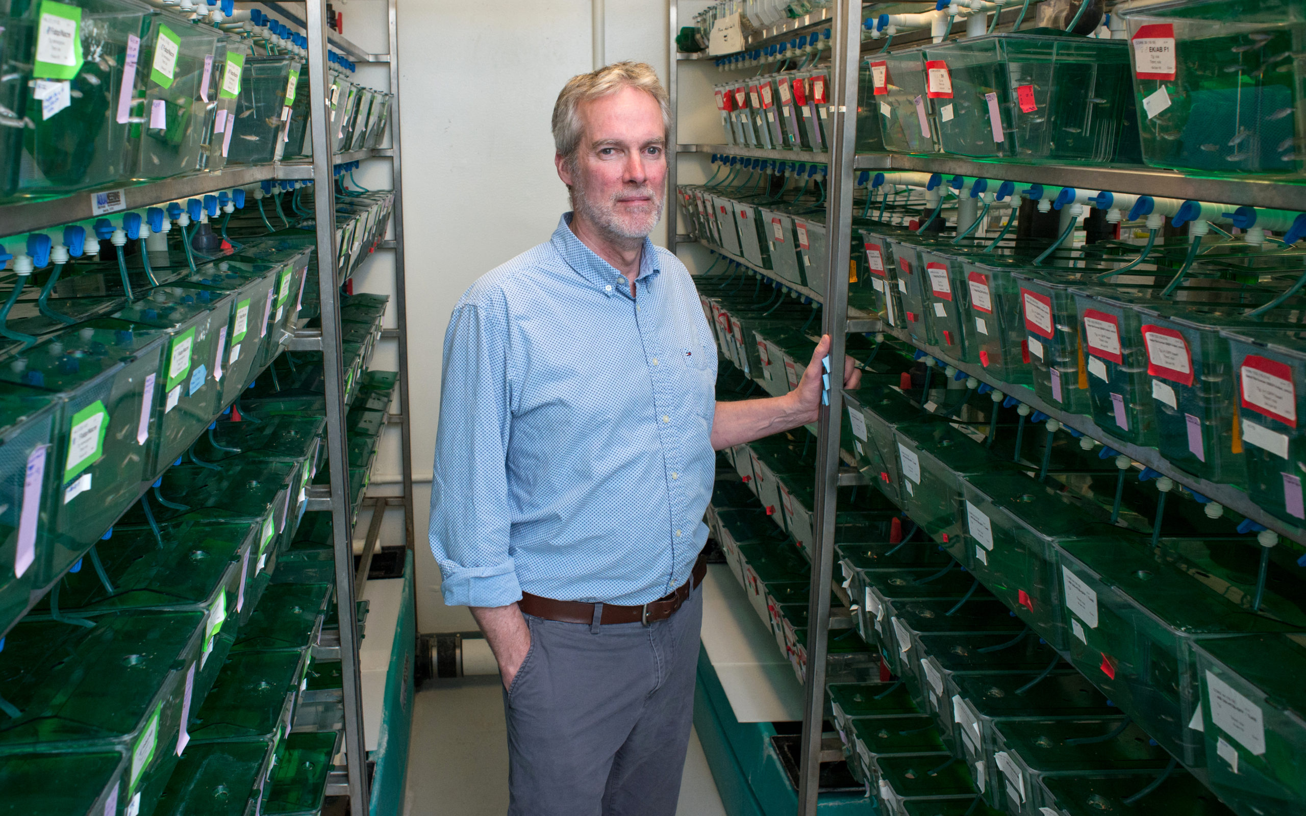 Research by Iain Drummond, Ph.D., Brings Science Closer to Kidney Replacement Tissue