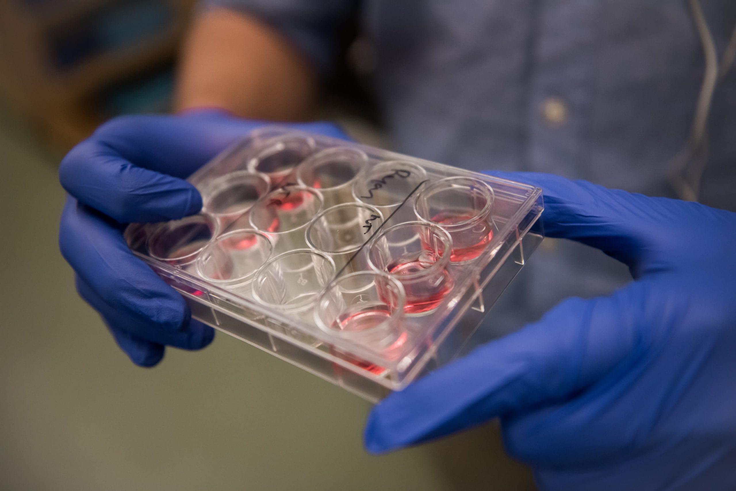 Maine Center for Biomedical Innovation