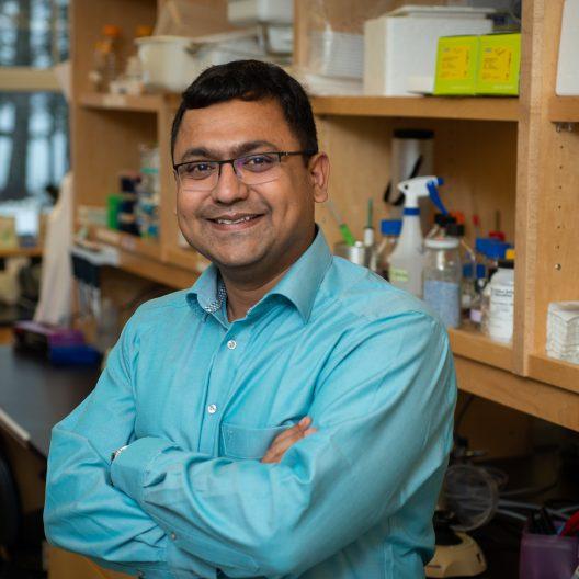 MDI Biological Laboratory Receives Grant to Study Tendon Regeneration