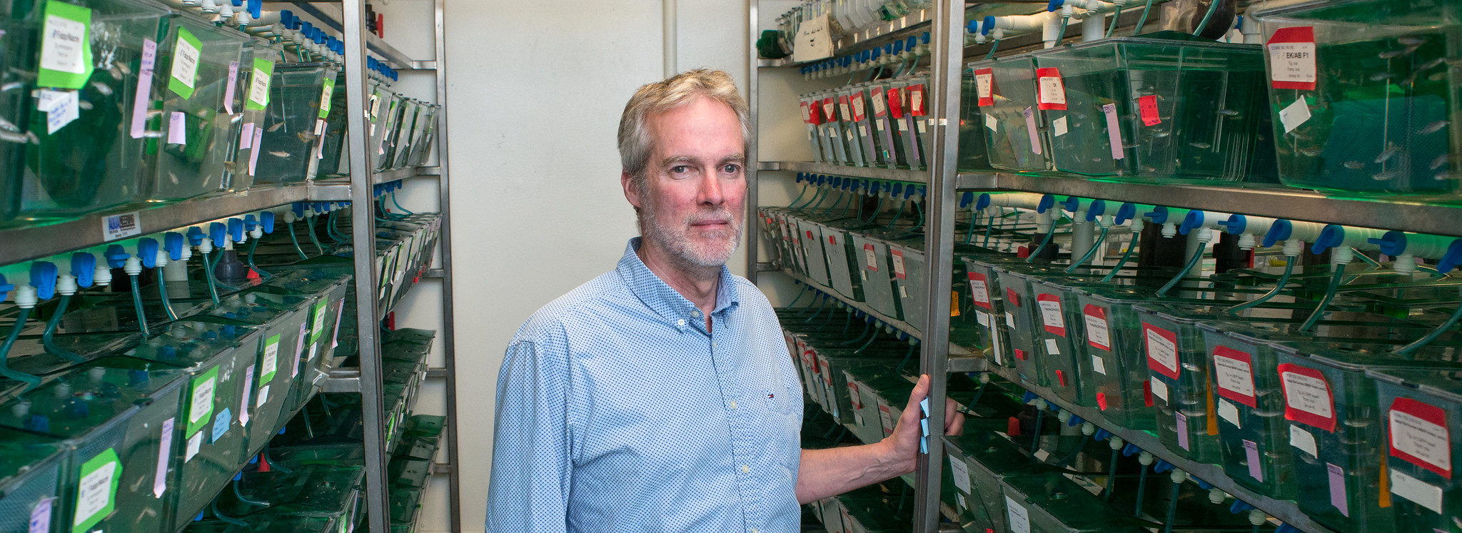 MDI Biological Laboratory Scientist Identifies Process Critical to Kidney Function